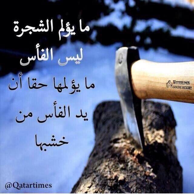 وكذلك نحن لا يؤلمنا نصل السكين بل اليد التي طعنته في أنفسنا وهذا يتمثل في غدر اقرب الناس إليك Funny Arabic Quotes Arabic Quotes Words Quotes