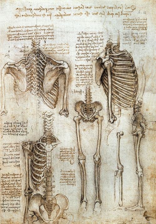 Leonardo da Vinci - Study of the Skeleton, 1511 | 技法 | Pinterest ...