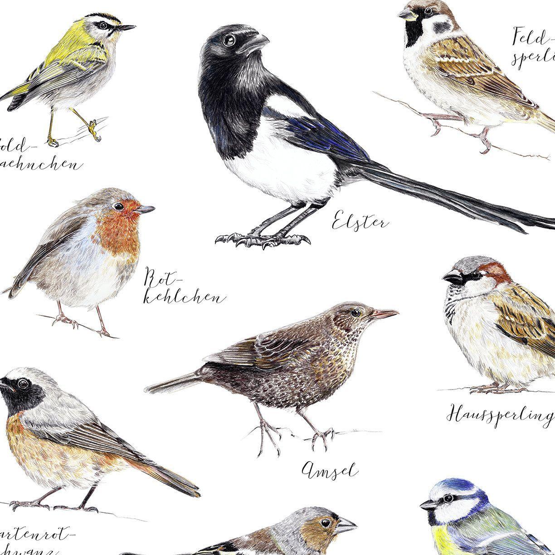 Birds In The Garden Poster Drawing Art Print Illustration Drawing Birds In 2020 Bird Drawings Animal Drawings Bird Poster