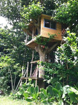 Kauai Treehouse Jay Nelson Tree House House In The Woods Building A Treehouse