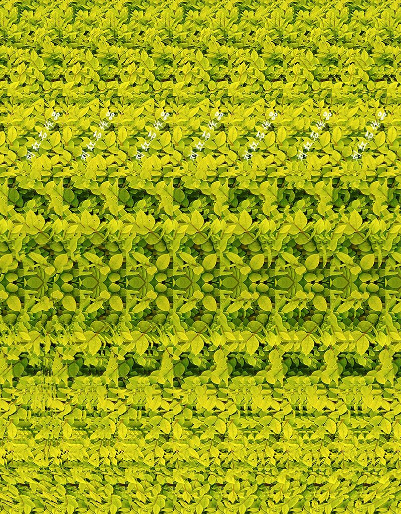 3d Photograph Giraffe Can You See It Magic Eye Pictures Eye Illusions Magic Eyes