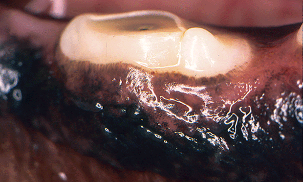 Tooth Resorption in Dogs Pet health care, Teeth, Pet health