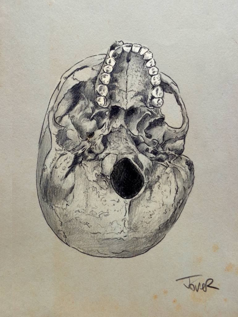 cranium study of the underside of the human skull drawing by loui