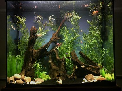 70 Gallon Tall Unplanted Community Tank Fresh Water Fish Tank Fish Tank Plants Aquascape