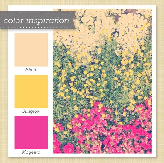Peach, Yellow and Pink Color Palette   Pink color palettes, Color ...