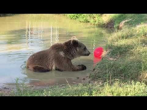 Bears Grizzly Syrian Brown Bears Oak Creek Zoo Texas Oak Creek Zoological Conservatory Brown Bear Bear Oak Creek