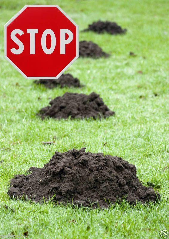MAULWURFNETZ, Maulwurfsperre für Rasen-Rollrasen, eine sichere Abwehr gegen Maulwürfe!