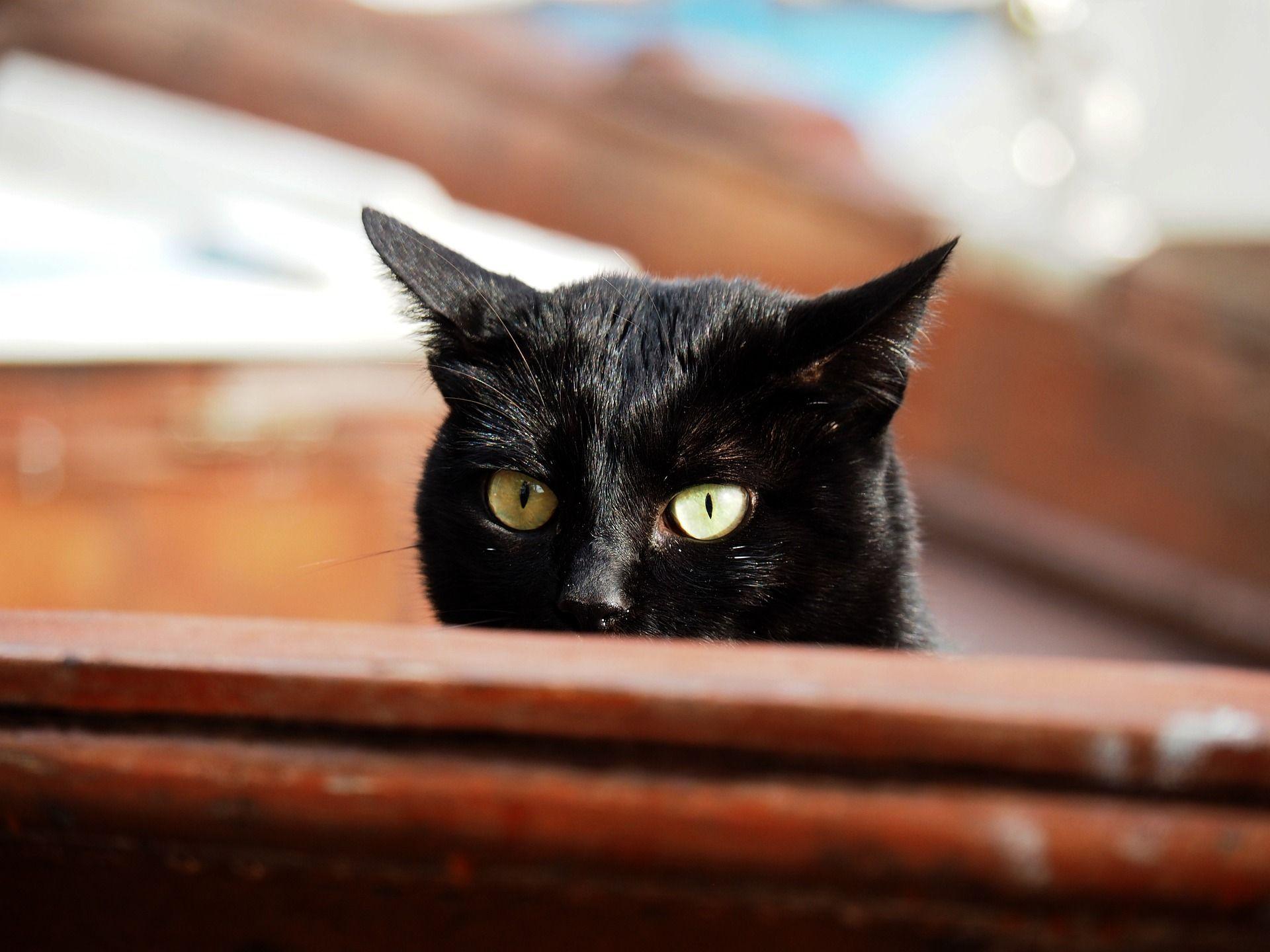 Cute Black Kitty Taking A Peek Cat Kitty Kitten Care