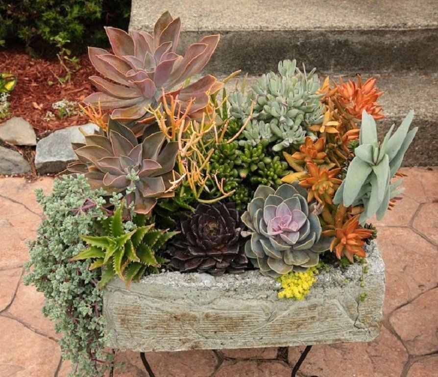C mo combinar suculentas en el mismo recipiente cacti - Composiciones de cactus ...