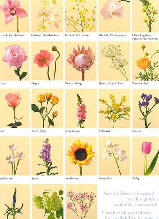 Pics Of Flowers And Their Meanings Flower Meanings List Of Flowers Irish Flower