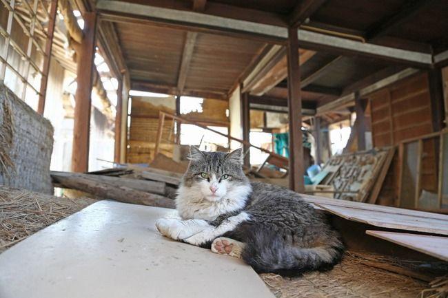 Photo of 【画像】まさに〝猫島〟いや「ネコの惑星」人間15匹に猫が100猫! : VIPPERな俺
