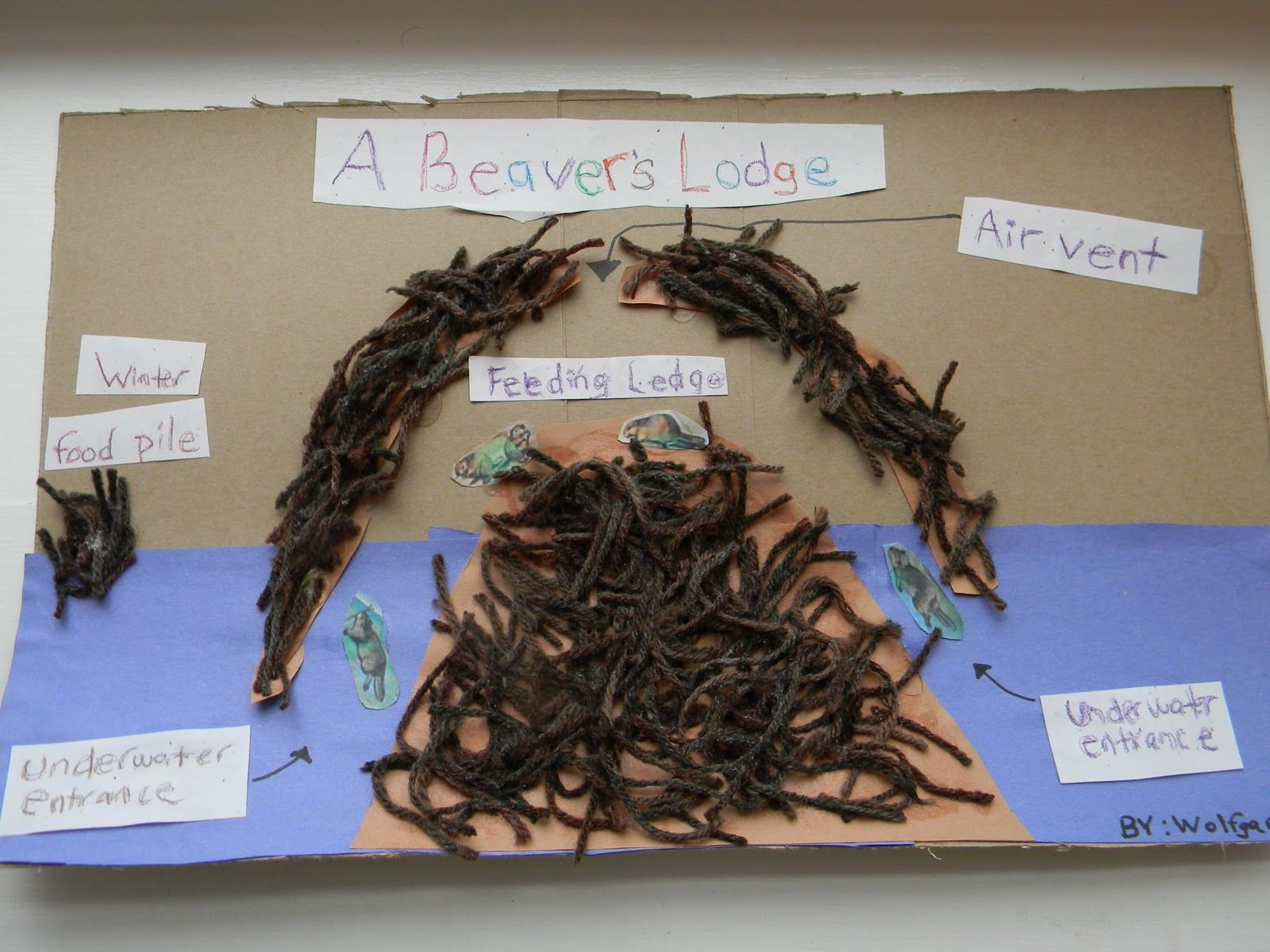 beaver facts beaver lodge biber school projects art projects grade 3 [ 1600 x 1200 Pixel ]