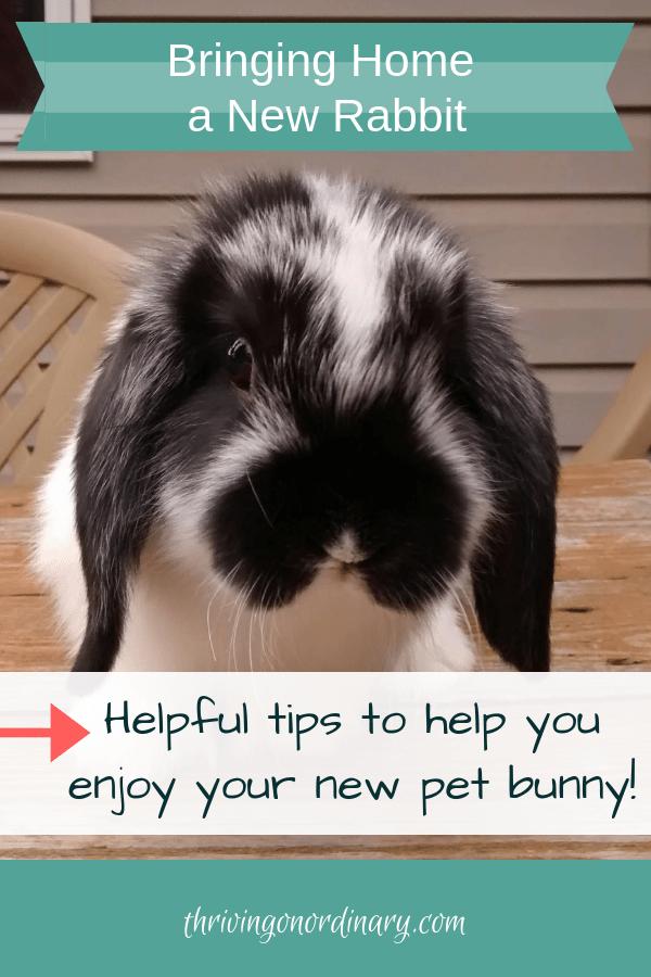 Bringing Home A New Bunny Pet Bunny Pet Bunny Rabbits Rabbits