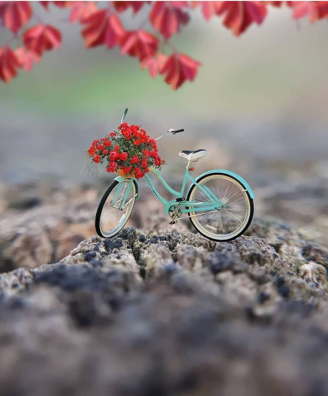 Pin By Kairafashion On Gifts Miniature Photography Cute Photography Dp Photos