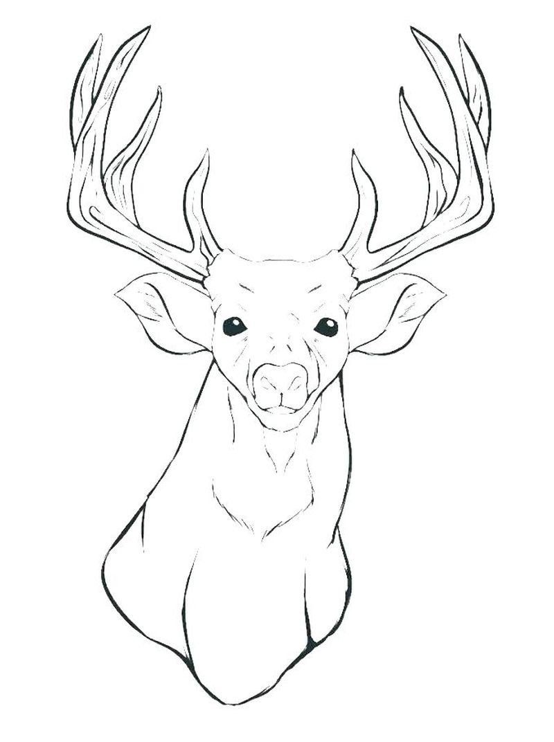 Deer Coloring Pages For Your Lovely Kids