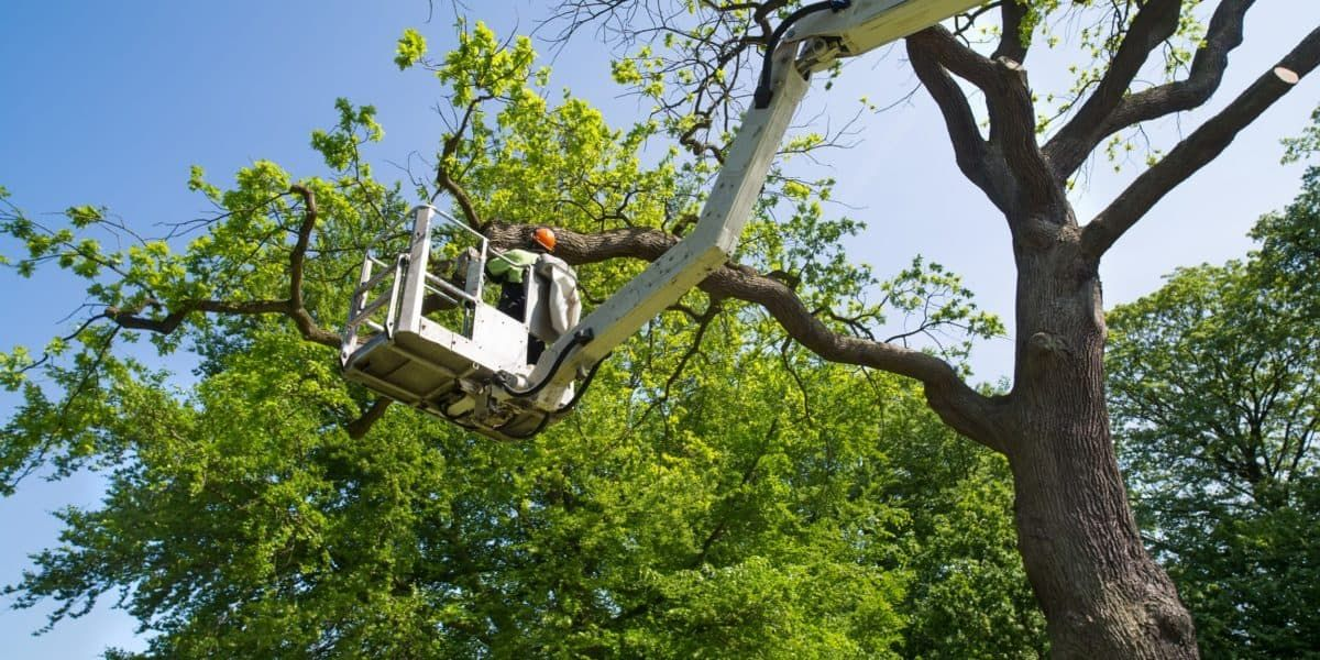 Have a dangerous or downed tree on your property