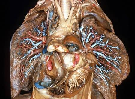 The human body a dissection not for weak hearted people human body publicscrutiny Images