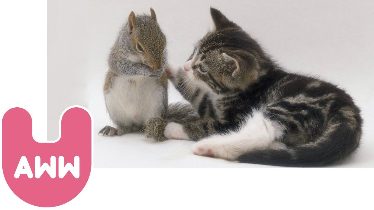 Cat Adopts Baby Squirrels Animals Baby Squirrel Cats Funny Cats