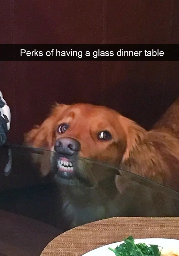 75 sweet and funny dog photos to boost your mood