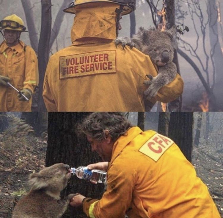 Pin by Shawna Kirk on Australia Fires Firefighter Giving
