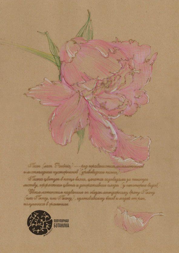 раскраска цветными акварельными карандашами | Ботанические ...