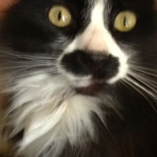 This Is My Cat His Name Is Pickles But We Call Him Mustachio He