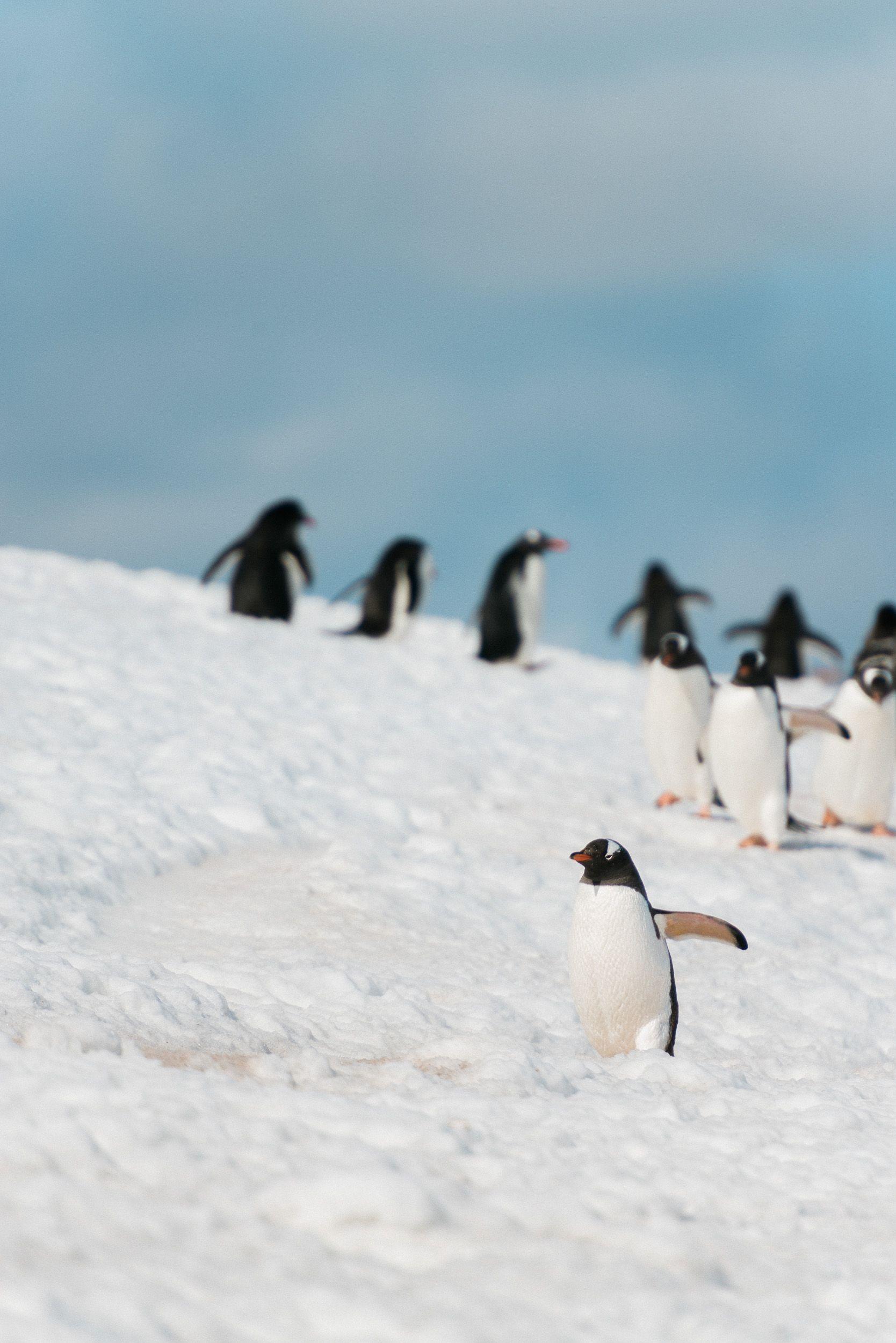 Hey there, little fellow! // With weddingpilots.de in Antarctica