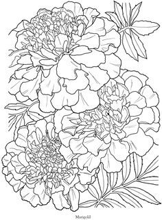 In Full Bloom A Close Up Coloring Book Marigold TattooMarigold FlowerFlower