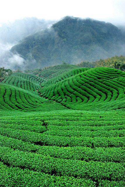 e3fc9907e6d7b7aac6b03b101736f20a - Things To Do In Tea Gardens