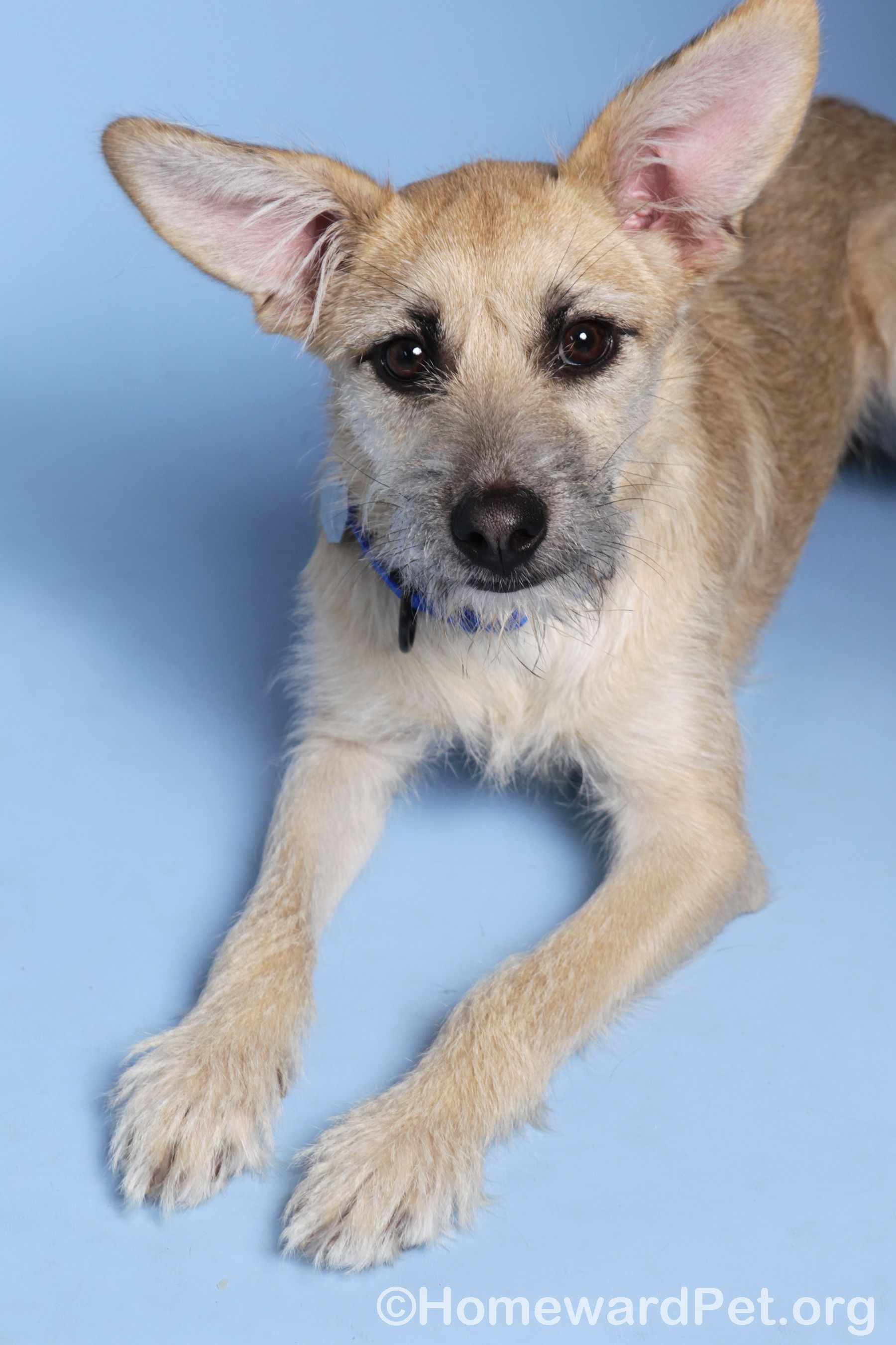 Caitlyn is a playful girl is a seven month old terrier mix