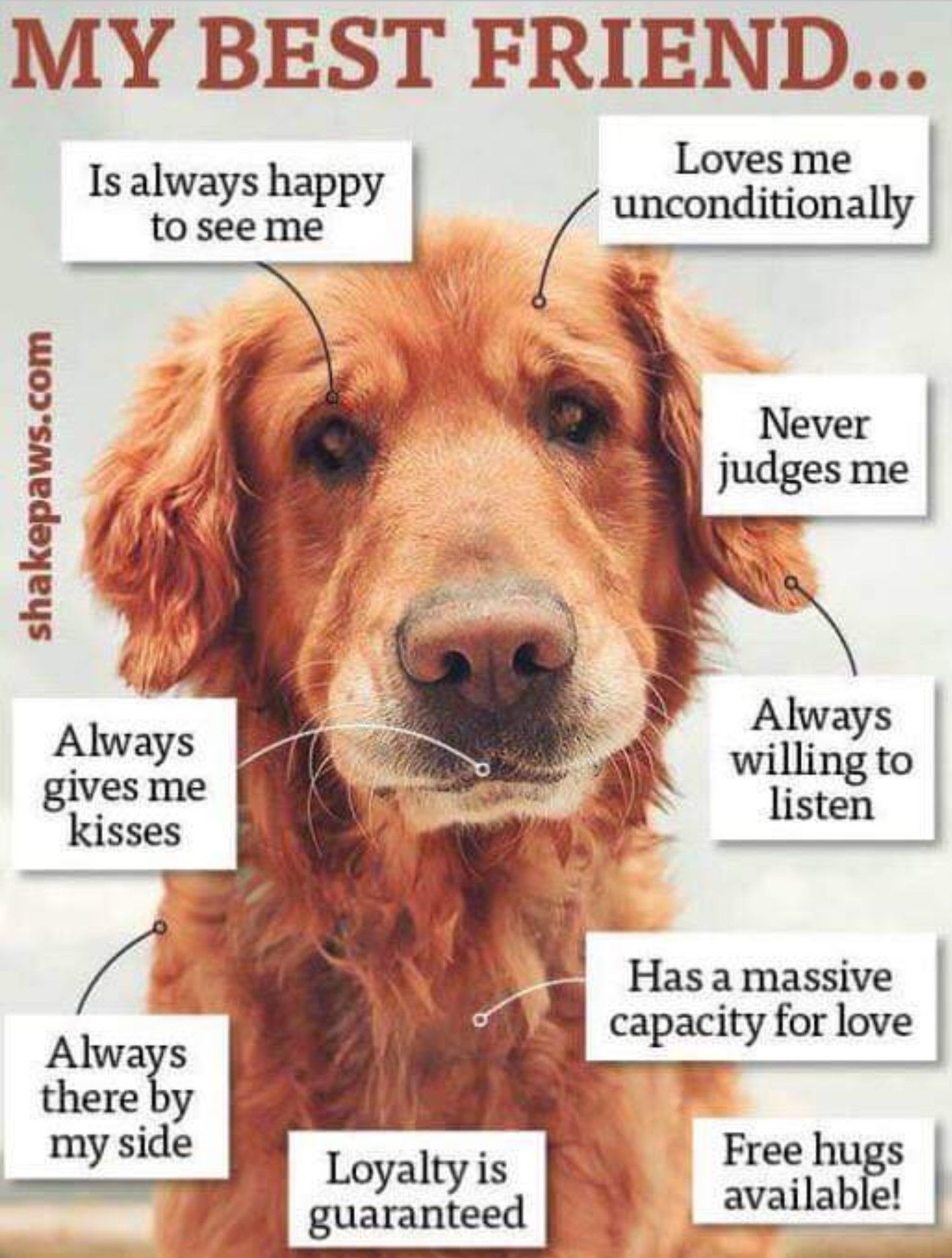 Pin By The Natural Companion Dogs On Golden Retrievers Dog Best Friend Dog Quotes Dogs