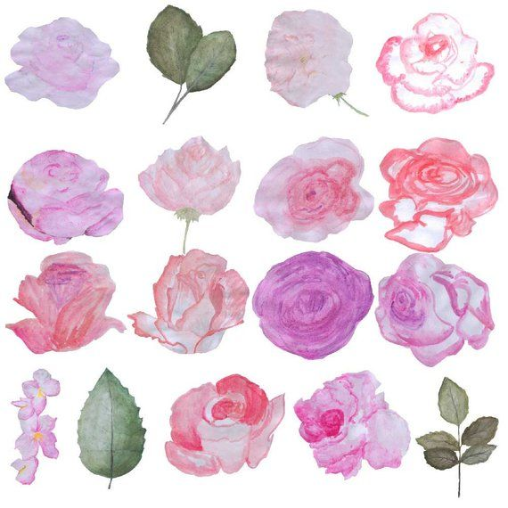 Hand Drawn Watercolor Roses Clipart Set Watercolour Floral Clip