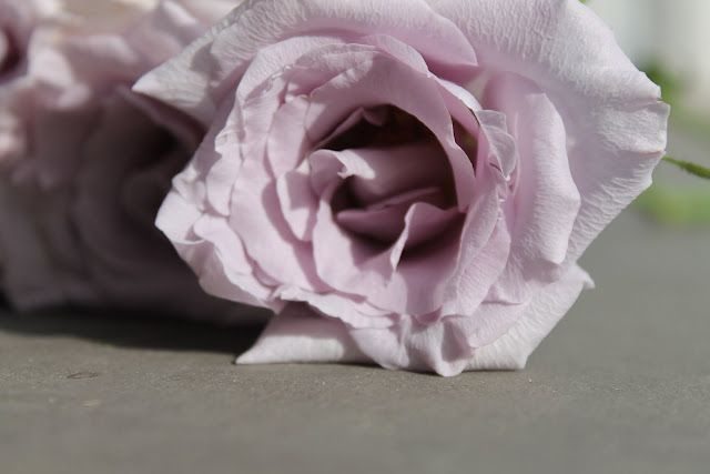 I love this colour of rose