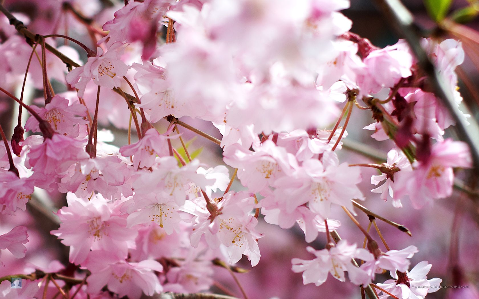 Refresh this SPRING PICTURES OF SPRING