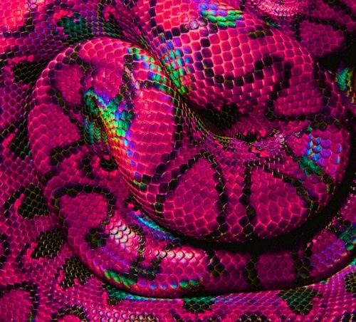 Pink Rainbow Snake Skin With Images Pink Snake Colorful