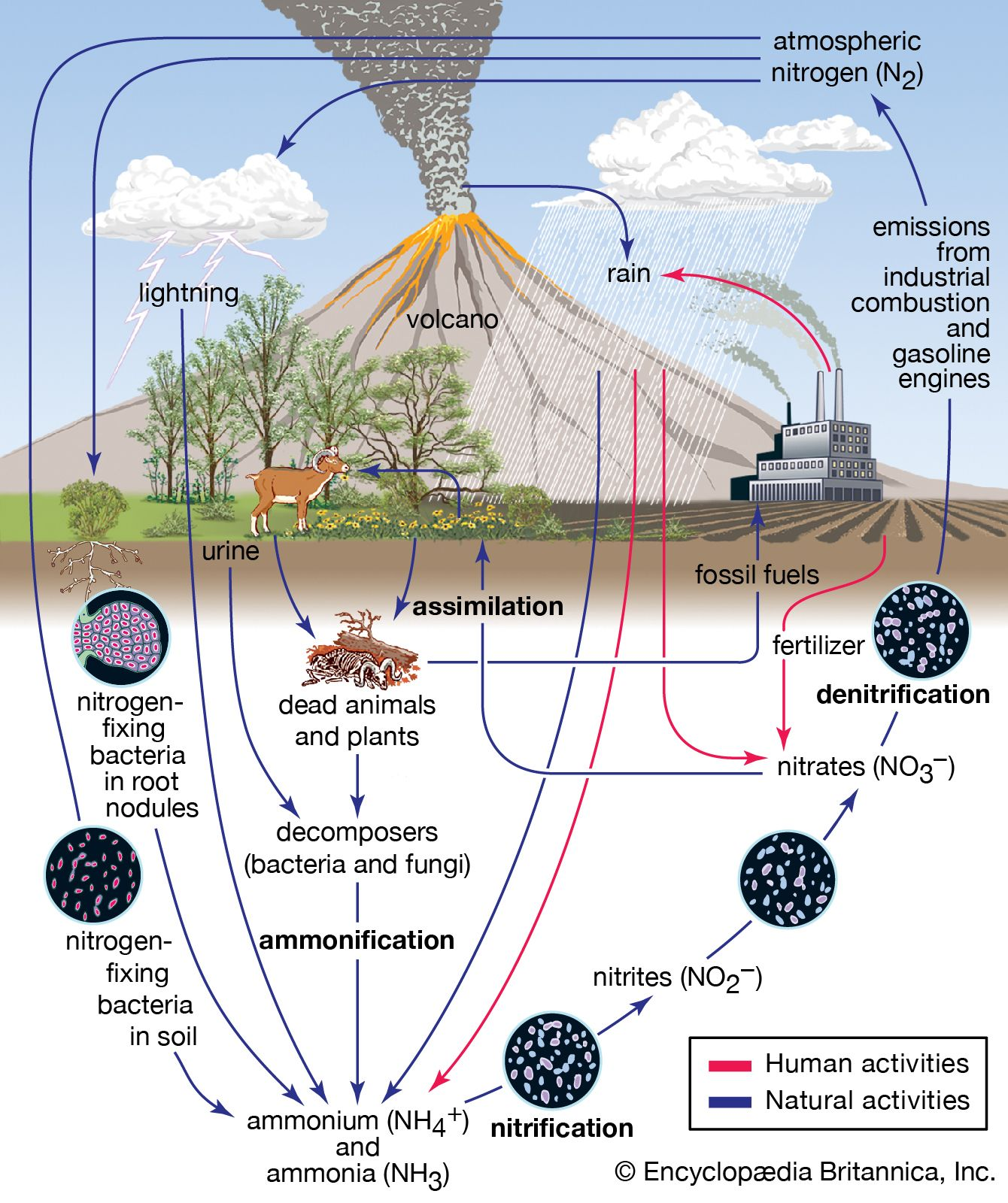 hight resolution of the nitrogen cycle