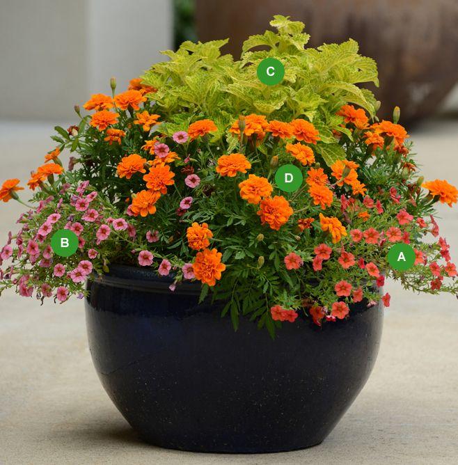 bol de punch annuelles pot fleur plante pots pinterest annuel punch et pots. Black Bedroom Furniture Sets. Home Design Ideas