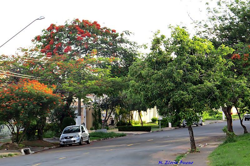 Uma rua florida.