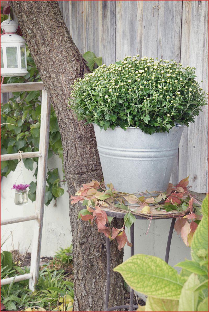 Garten Konzept 28 Tolle Wasserbrunnen Für Garten O66p My Favorite