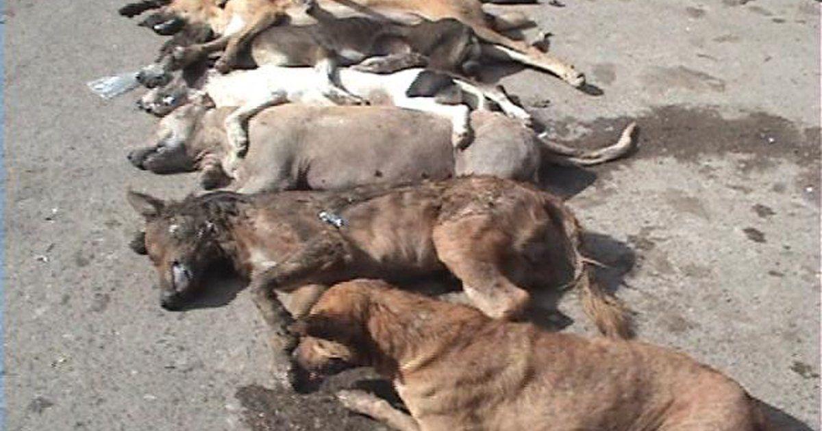 Por no entregar a sus perros a un equipo de rescate dejó que murieran de hambre. Qué vaya a la...