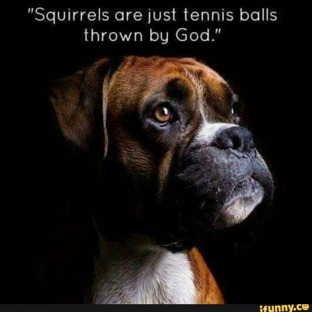 The purpose of squirrels  #Christianmemes