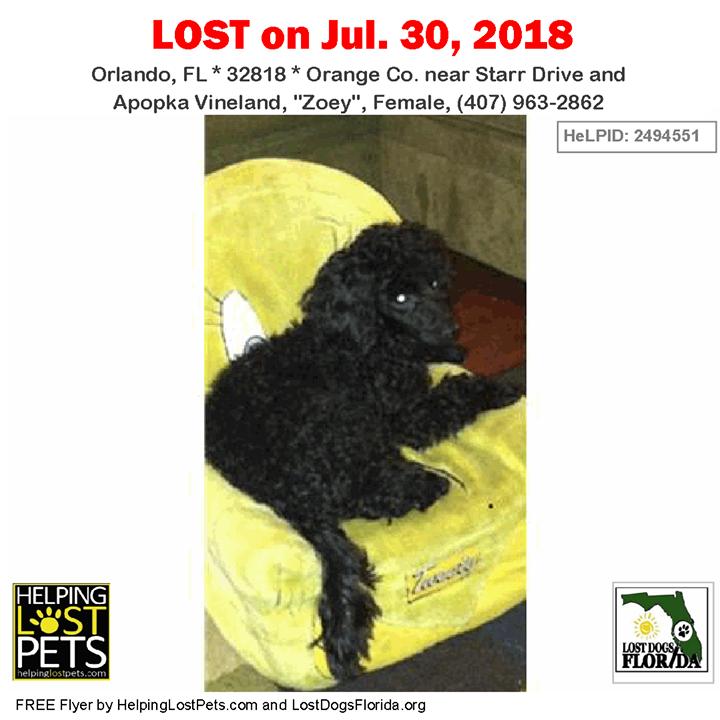 Have you seen this lost dog? LOSTDOG Zoey Orlando