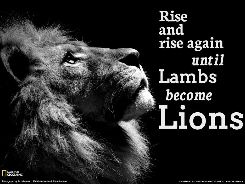 Rise And Rise Again Until Lambs Become Lions Google Zoeken Image Xxl Animal Wallpaper