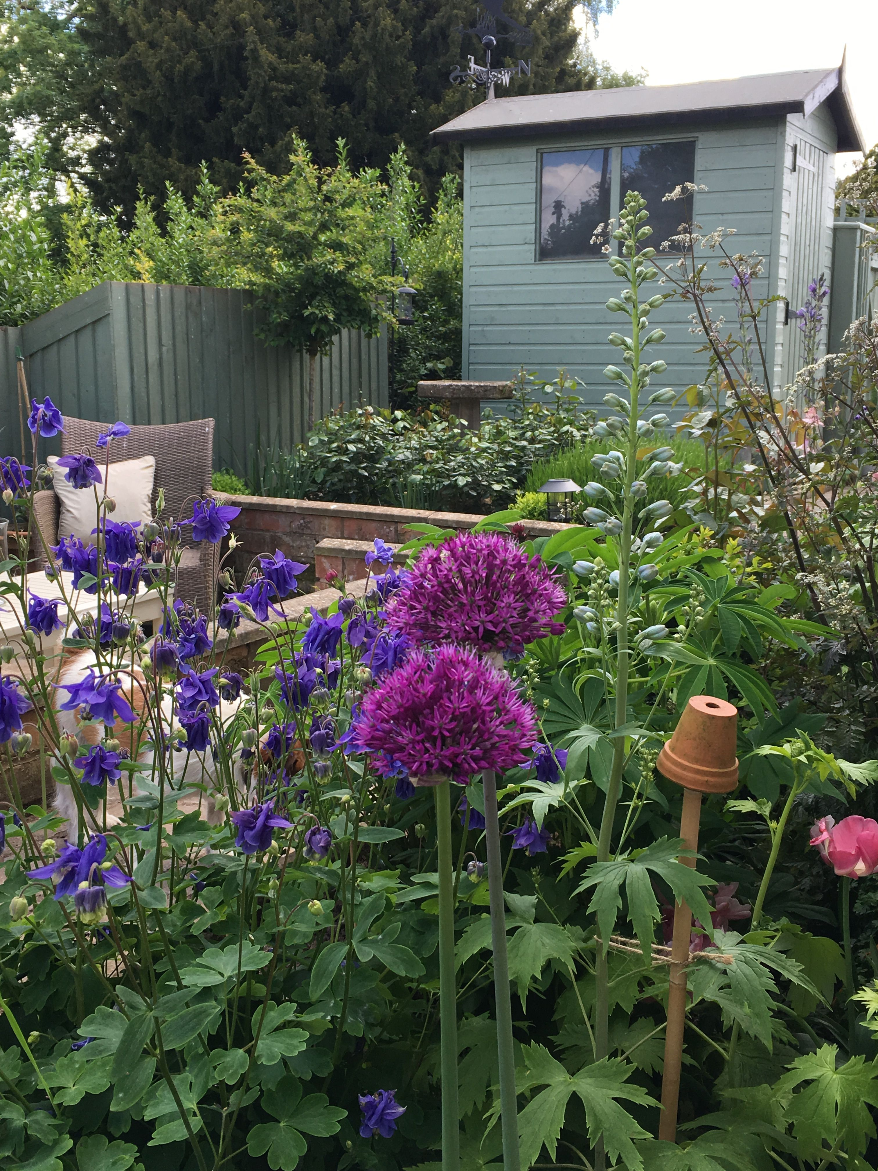 Alliums in the long border... Old cottage, Cottage