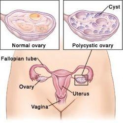 Usa pussy girl image