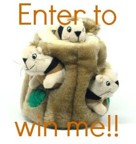 Win a Kyjen hide-a-squirrel toy for your dog