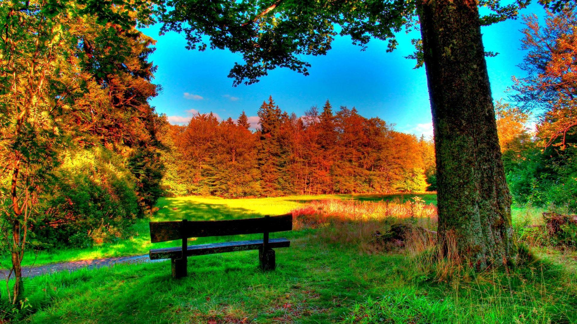Beautiful Park In Schotten Germany In Autumn Hdr HD Desktop Background wallpaper free