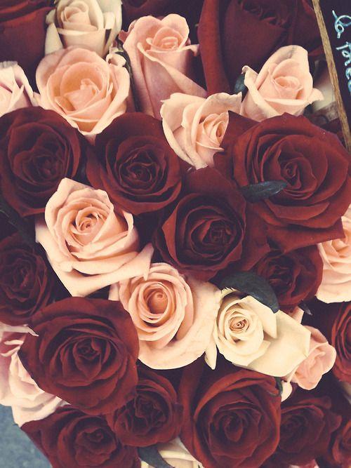 1 Tumblr Wallpapaaaassss Pinterest Rosas Flores And Floral