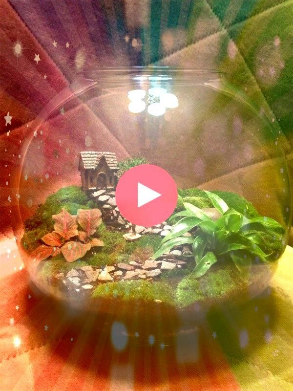 terrarium I built today Message if interested  Gardening Sustainanniversary terrarium I built today Message if interested  Gardening Sustain Want to know how to plant a t...