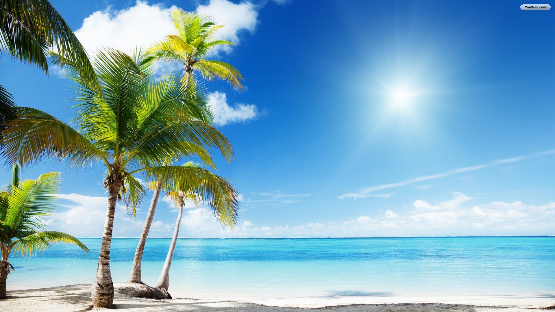 tropical oasis backgrounds google search a· beach wallpaperwallpaper